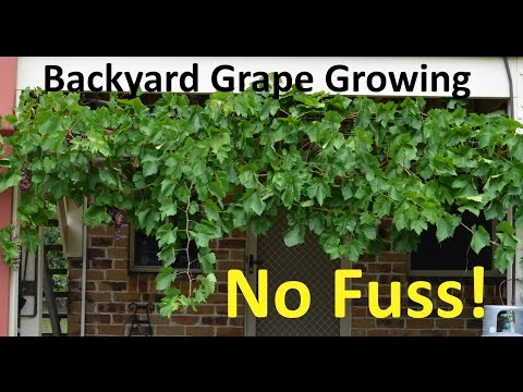 No Fuss Backyard Grape Growing Pruning Propagating Youtube