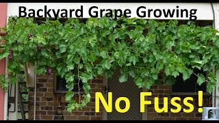 No Fuss Backyard Grape Growing Pruning Propagating