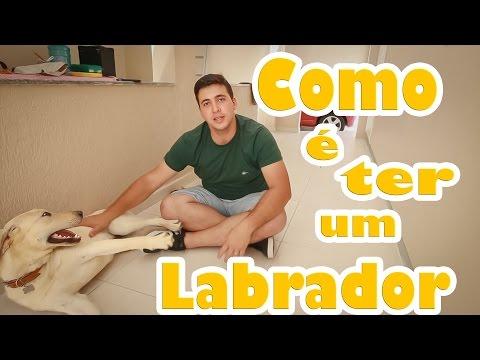 Como é ter um LABRADOR ? - Vlog Lucas Cunha