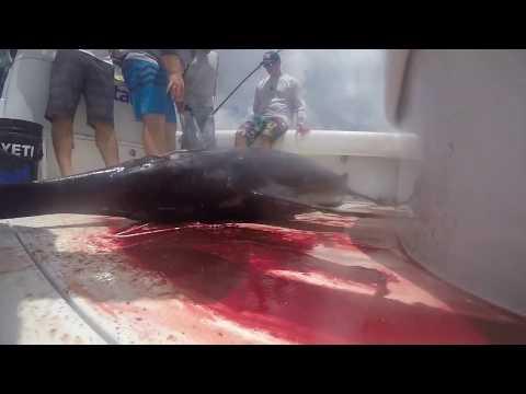 Mexican Gulf Fishing