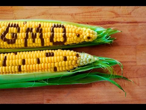 Sounding the Alarm on GMOs and Glyphosate