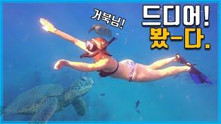 장수의 상징, 바다거북…