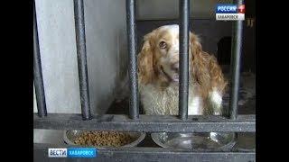 Вести-Хабаровск. Собаку забрали