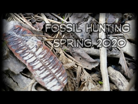 Fossil Hunting Illinois ; Spring 2020