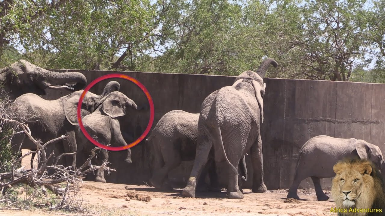 cute baby elephant bumps head youtube