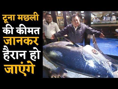 World में आखिर Tuna Fish इतनी महंगी क्यों है ?