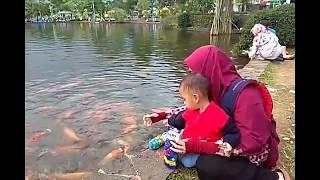 Kasih makan ikan di kolam sai habis satu bungkus besar Ikannya makannya lahap