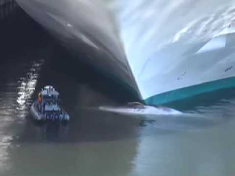 Whale Impaled By Cruise Ship YouTube - Cruise ship whale