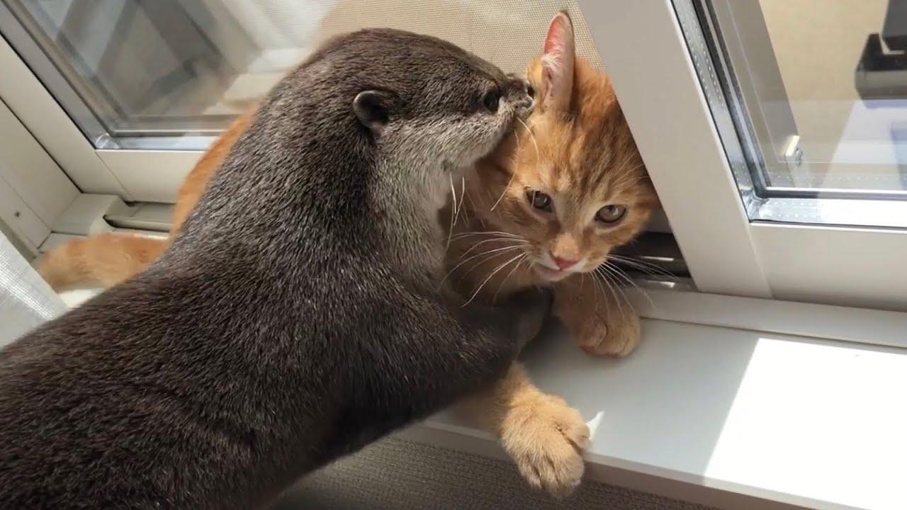 カワウソさくら どんなところでも遊び場にしてしまうカワウソ子猫  Otter and kitten  that play anywhere