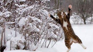 Подборка - животные и снег. Animals and snow