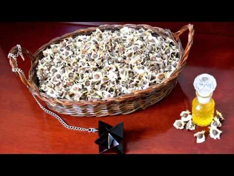 Beneficios de las semillas de moringa