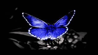 Eelke Kleijn - Papillon (Original Mix)