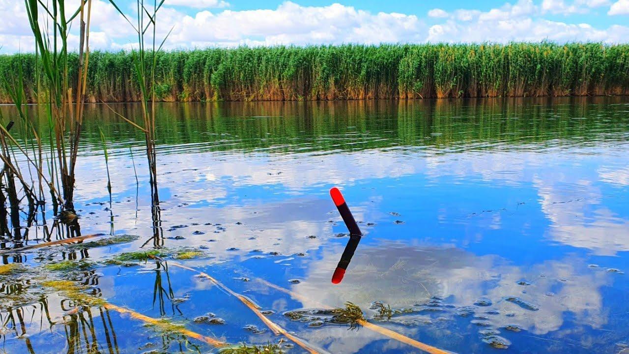 ЛИНИ УТЯГИВАЮТ ПОПЛАВОК В ЧАКАН рыбалка на ПОПЛАВОК линя и леща