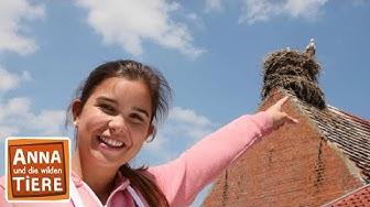 Wo klappert der Storch? (Doku) | Reportage für Kinder |Anna und die wilden Tiere