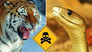 Top 10 Most Dangerous Predators On Earth - Part 1 Vlog#20 by HooplakidzLab