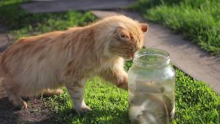 Funny Cats Playing videos Compilation