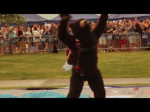 Labatt Blue Skydiving Bear