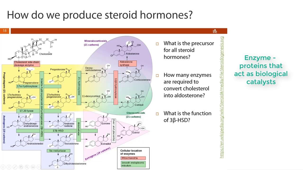 Nursing Chem - Lipids Part 2 - Steroids & Eicosanoids - YouTube