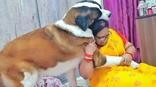 Gentle Giant love for his mom | Saint Bernard puppy 15months old playing with mom
