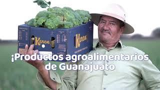 La exportación del sector agroalimentario crece en Guanajuato | #UnidosReactivemosGTO