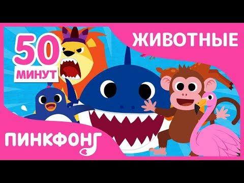 Акулёнок и другие песни | Песни про Животных | +Сборник | Пинкфонг Песни для Детей