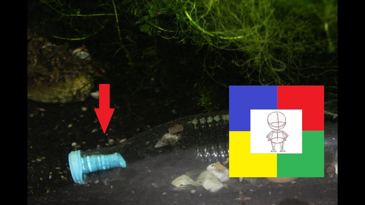 Как уменьшить количество улиток в аквариуме #самодельная ловушка своими руками#