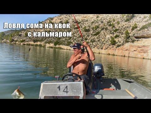 Ловля сома на квок с кальмаром / Clonk & Calamari