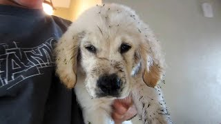 FOUR YEARS WITH A GOLDEN RETRIEVER Video