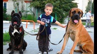 Дрессировка собак. Норд и маркер. Положительная дрессировка