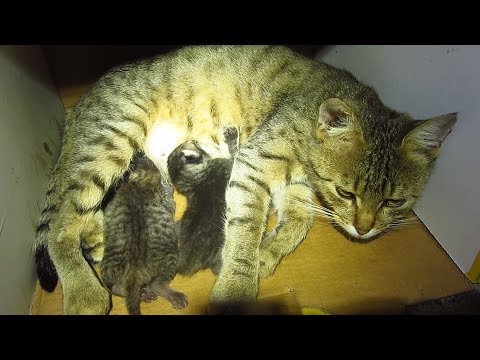 The cat gave birth to kittens in stairwell apartment building