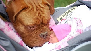 Try Not To Laugh With Funniest Moment Baby Sleep With Dog | Dog loves Baby