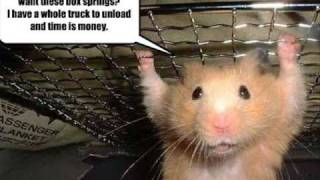Funny Hamsters and Guinea Pigs