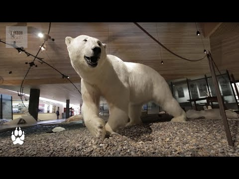 5 Things Not To Miss In Svalbard - Ice Town Vlog - Earth Unplugged
