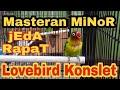 Masteran Minor Lovebird Konslet Jeda Rapat  Mp3 - Mp4 Download