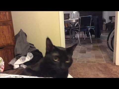 Cat Attack On Elm Street
