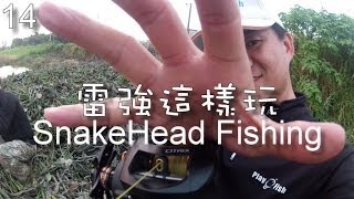 Play Fish 14, Snakehead Fishing this way  雷強這樣玩