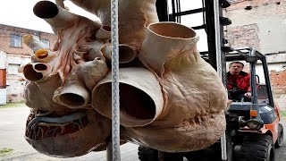 BIGGEST Animal Organs and Body Parts!