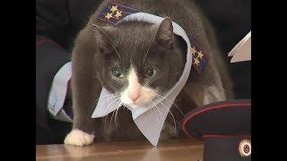 В полиции Красноярска уже 15 лет служит огромный серый кот Полковник Матроскин