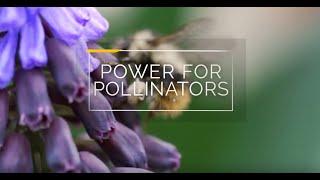 Power For Pollinators