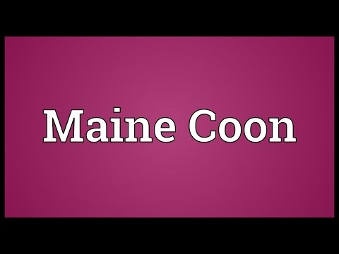 Maine Coon Meaning