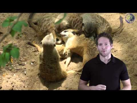 Paul's Planet Presents: Animals of Africa