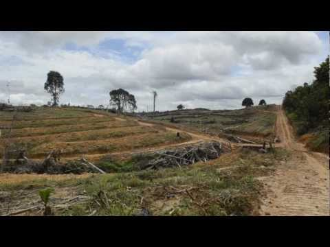 Paradise for Palm Oil: The Greenwashing of Indonesian Deforestation