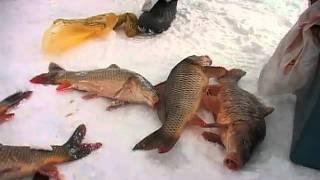 """""""Зеркальный карп""""- база рыбаков.""""Айда на рыбалку!"""" вып.5."""