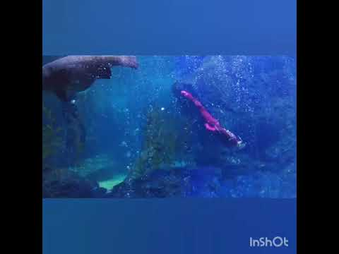 Sea life bangkok