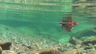 面河渓谷で泳いできました。本当は涼しい所ですが30℃と暑く、川遊びには...