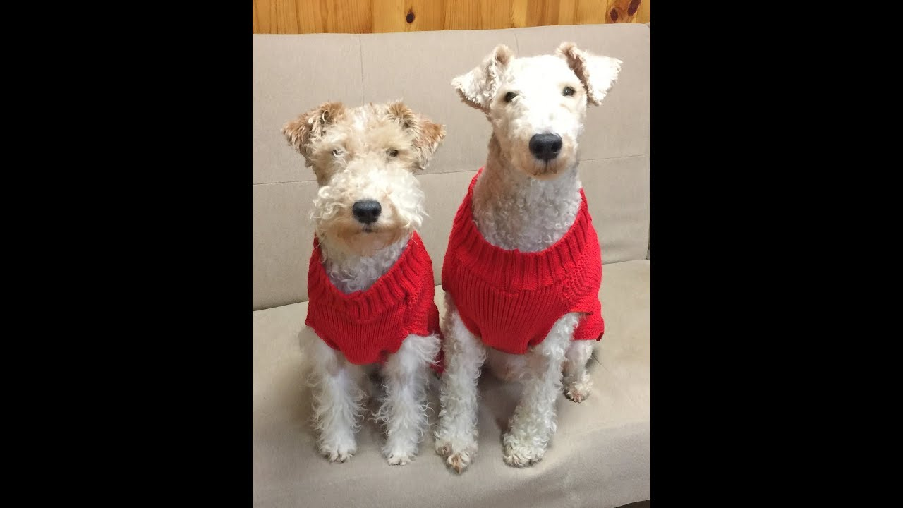 WIRE FOX TERRIERS BRANDY & BRODY: HASHTAG - WE LOVE TOYS! - YouTube