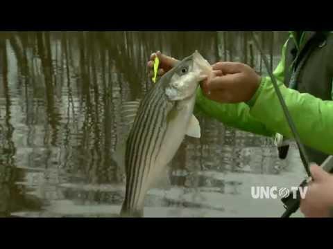 Roanoke River Winter Fishing   NC Weekend   UNC-TV