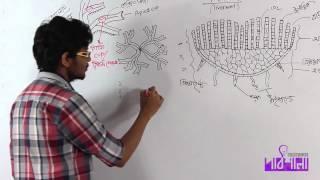 02. Riccia | রিকসিয়া | OnnoRokom Pathshala
