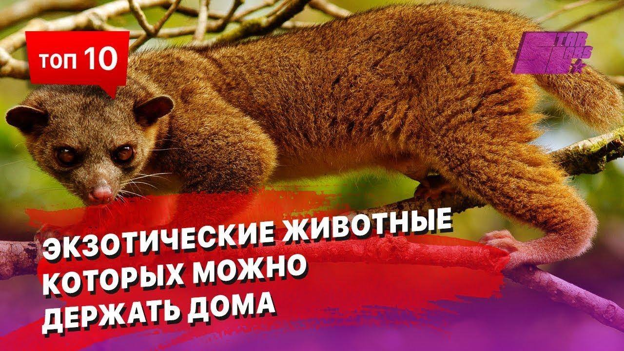 10экзотических животных, которых можно держать дома