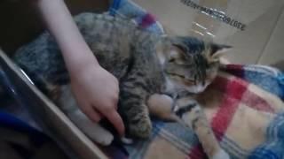 Кошка Муся родила котят